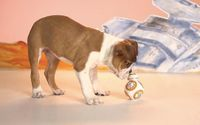 """Dogs are man's best friend, but can droids be canines' best pals? Watch this video to see if puppies can be """"Star Wars"""" fans too."""