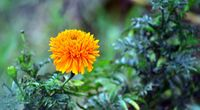 Beautiful Orange Flower screen hd wallpaper