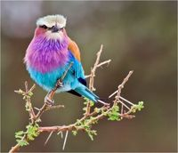 Gods Colorful Bird!! what an artist he was