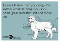 Life lesson from my dog:)