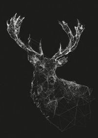 Deer: Jordan Rogers
