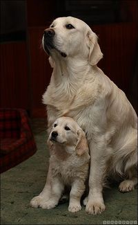 We need a yellow lab named Isis... ;-)