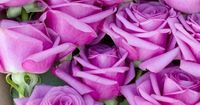 Good vibes included. The #rose #roses #flowers Get wowed with an amazing bouquet: http://www.bloomsybox.com/
