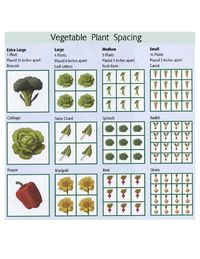 vegetable plant spacing (from My Homestead Gallery)