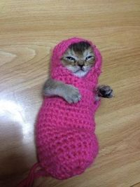 The Web loves a good cat picture. But when the photo shows kitten in a crocheted outfit, the Internet takes a collective swoon. The images of the teeny feline have been tweeted by the kitten's owner, known by her Twitter handle,