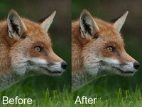 Most people who have experimented in Photoshop, especially those who shoot in raw, will have some experience of trying to sharpen an image. Sharpening increases