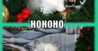 Kitteh Excited for Christmas .. what a cute kitten smile !! <3