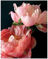 Pink flowers represent sweetness. They are sweet and gentle Flowers that cause you to smile immediately. This guide will provide you with advice about what will