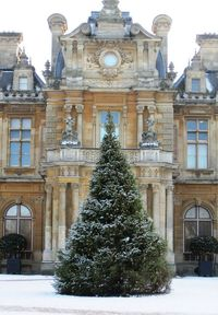 christmas trees, country houses and waddesdon manor.