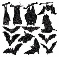 Wild Night Bats Just for: $12.99