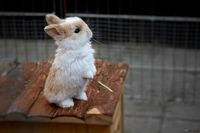 I have a weakness for little bunnies :}