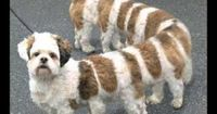 What happens when you cross a centipede and a dog?