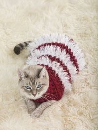 Holiday Pet Sweater - would have to make it without the Fun Fur