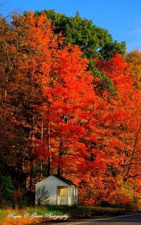 Blazing colors of fall! I think we are all ready for this!